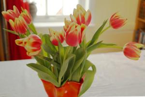 Glade tulipaner i vase (Foto: Nina Solbakk)